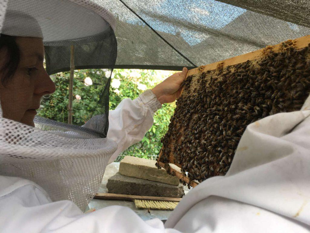 Arthurkopf Imkerei Bienen Wabe